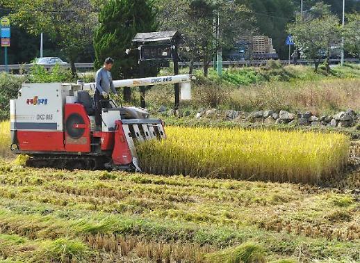 올해 쌀 생산량 378만t 전망…39년 만에 최소