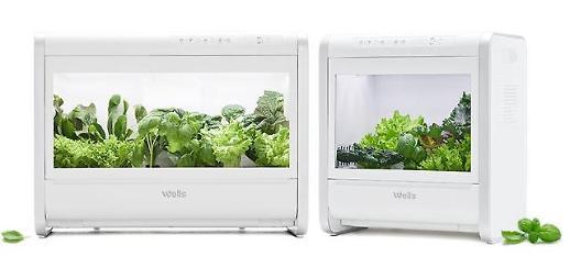 집에서 채소 키워 먹는다…눈 돌리는 가전업체들