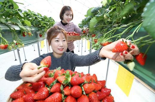 딸기·포도 1억 달러 수출 품목 육성...농식품 수출 75억 달러 목표