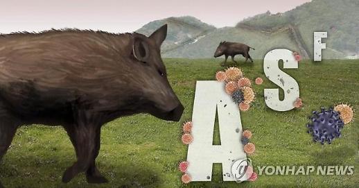 화천·파주·연천 야생멧돼지 폐사체서 ASF 추가 확진…총 104건
