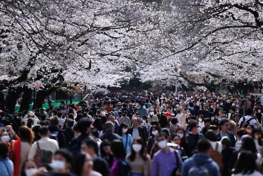 [포토] 일본, 이 와중에 벚꽃 인파 실화(?)