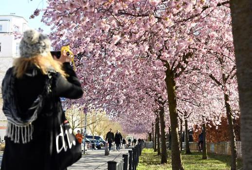 [이상국 뉴스풍경] 코로나19시대의 벚꽃 거리두기… 붉은빛이 여전합니까