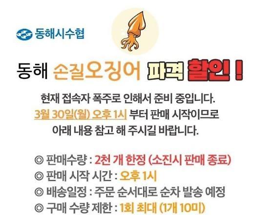 동해시, 30일 '동해몰'서 오징어 1상자에 2만원 판매