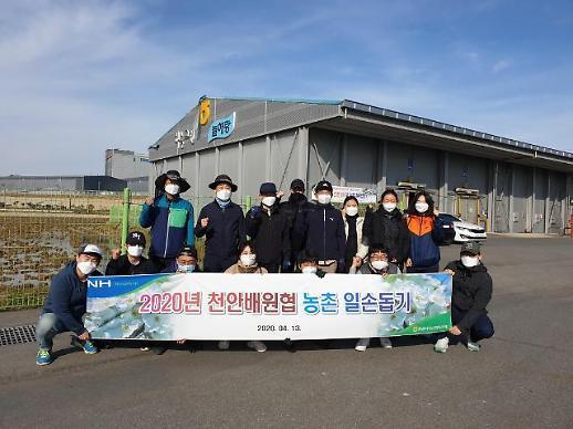 [농어촌] 코로나19로 인력부족, NH농협무역 천안 배 농가 일손돕기