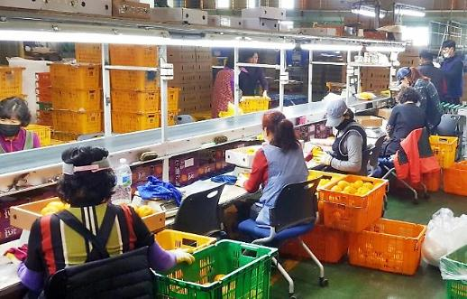 [농어촌] 코로나19에, aT 농산물 온라인 경매 늘린다