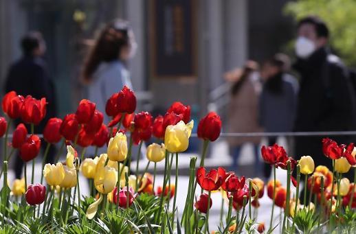 [광화문갤러리] 영하 날씨에 화들짝, 매서운 4월의 꽃샘추위