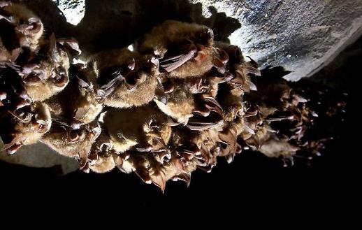 바이러스 옮기는 야생동물 수입 차단한다