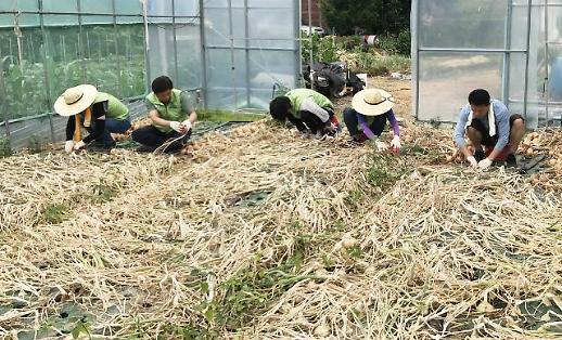 농번기 외국인 노동자 없어 '발동동'...도시민 농업 중개 활발