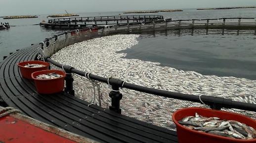 오징어·고등어 감소에 올해 총 허용어획량 28만6000t...7% 줄어