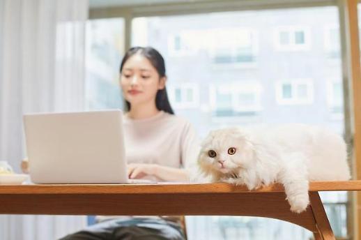 Nhiều người lao động Hàn Quốc hài lòng với việc làm việc tại nhà