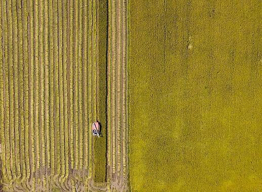 Mùa thu Hàn Quốc trên những cánh đồng và nông trại
