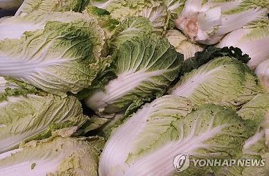 Giá sản xuất tháng 11 vẫn dậm chân tại chỗ…Lượng hàng xuất kho tăng nhưng bắp cải 46%↓