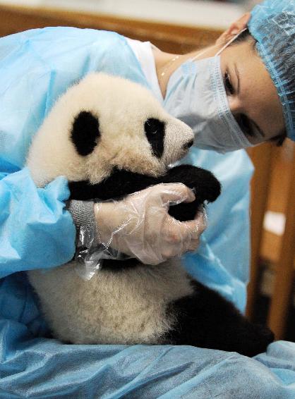 .守护熊猫.