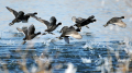 低飞昭阳江的观鸟