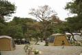 <7月推荐旅游路线①>松风阵阵:杨平松园露营地