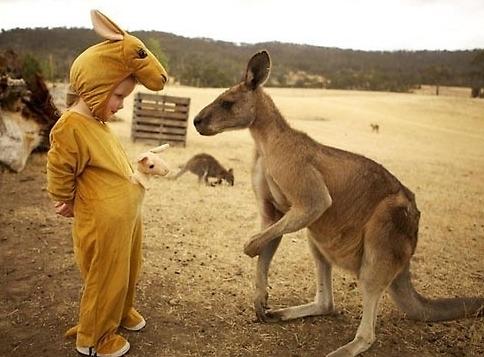 如今有一只袋鼠却被身着袋鼠服装的小宝宝迷惑,憨态可掬.