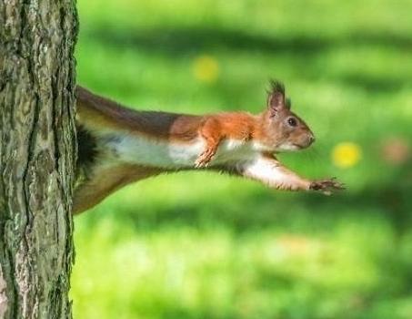"""对此,韩网友纷纷说道:""""小松鼠好可爱哦.它的眼神好奇葩,好萌啊."""