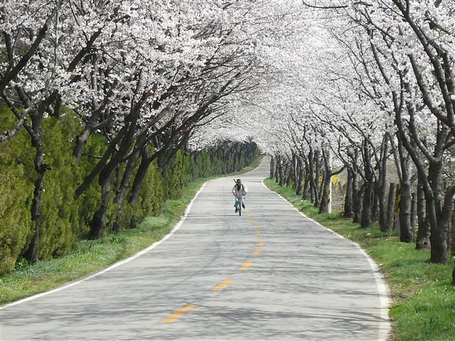 满是山樱树,流苏树,枫树的林间小路并不平坦,但是上上下下的坡路却