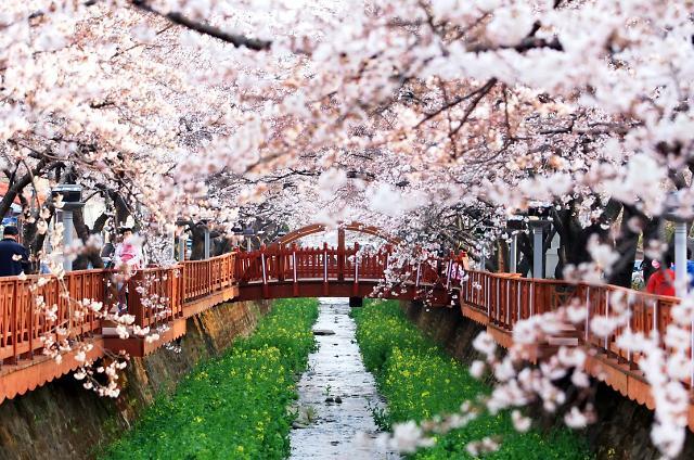 初春领略韩国最大樱花庆典——镇海军港节