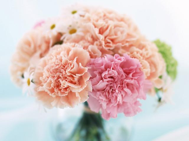 """表示:""""在双亲节(5月8日)和教师节(5月15日)送上康乃馨,有感谢父母和"""