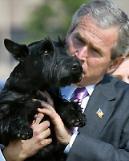 """.小布什爱犬去世 患癌被""""安乐死""""."""