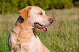 냄새로 주인을 암에서 구한 개, 코 가슴에 대고 킁킁거려 검사해보니 유방암?