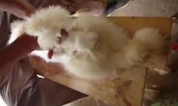 [유튜브] 모피·앙고라의 끔찍한 이면 토끼 입지 말고 안아주세요