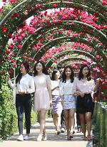2015 Seoul Rose Festival to open May 29