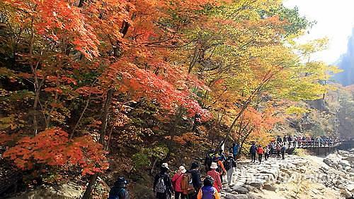 2015年秋季旅游周 赏枫看景忙不停