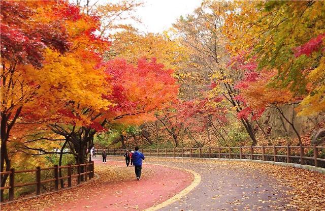 在首尔遇见秋季最斑斓的颜色
