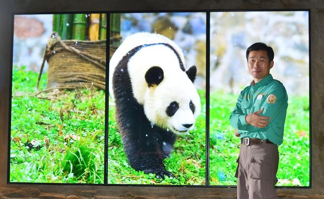 """【专访】熊猫情侣入住爱宝乐园 """"来访中国游客或增50%"""""""