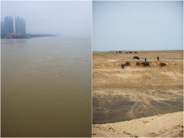 [영상중국] '소 거닐던 강바닥' 폭우로 물바다