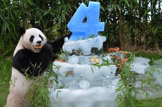 爱宝乐园定制冰块蛋糕 为旅韩熊猫庆生
