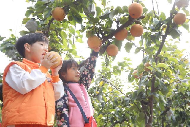 儿童体验水果采摘