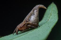 New Spider Species found in India named after Harry Potter sorting hat