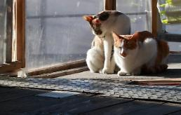 .S. Korea orders hunt for stray cats to test blood samples.