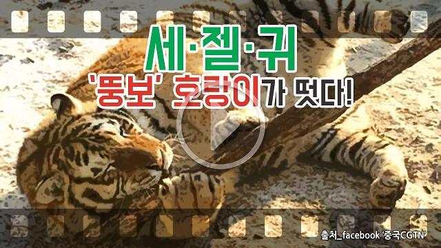 [아잼 이슈] 세·젤·귀 뚱보 호랑이가 떳다!