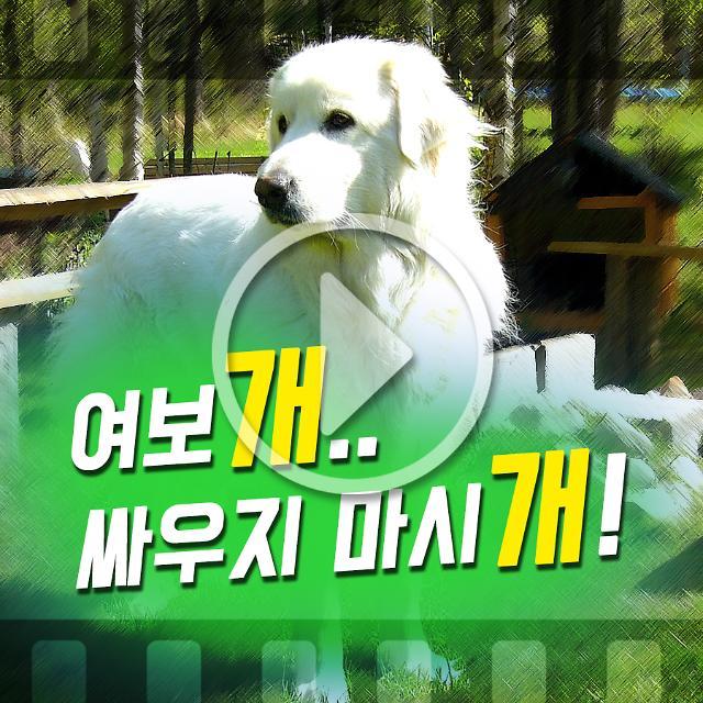 [아주 동영상]우리집 평화는 개가 지킨다, 평화 지키는 애완견