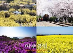 올봄, 보고싶은 봄꽃은? 1위 남원 매화·2위 제주 유채꽃