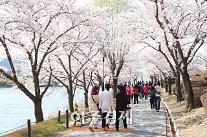 경주시, 제1회 경주벚꽃축제 31일 개막...10일간 봄 축제 활짝