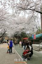 과천시 '과천 벚꽃엔딩 축제' 열려
