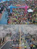 예산군, '제13회 예산벚꽃 전국마라톤대회' 준비 순항