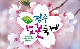 경주벚꽃축제 2017 D-1…벚꽃 명소에서 펼쳐지는 다양한 프로그램 눈길
