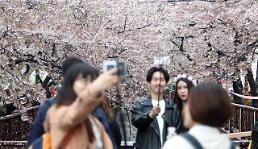 [PHOTO] Tourists enjoy walk in flower trees