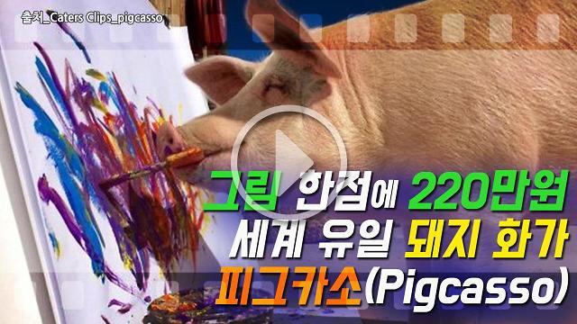 [아잼 이슈]그림 한점에 220만원, 세계 유일 돼지 화가 피그카소(Pigcasso)