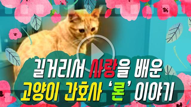 [아잼 이슈]길거리서 사랑을 배운 고양이 간호사 론 이야기