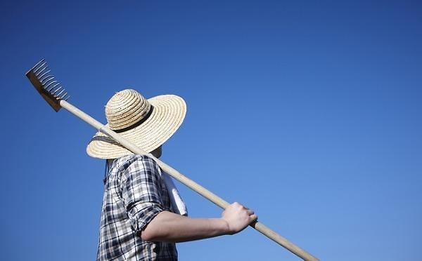 韩年轻人不爱打工爱种地 自愿回乡做职业农民