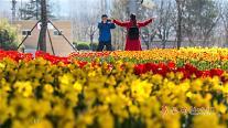 중국 노동절 연휴 온다, 들썩이는 칭다오 관광업계