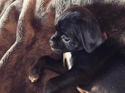 .Hilary Duff adopts Puppy No One wanted .