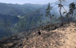 [PHOTO] Trees burnt to ground by forest fire